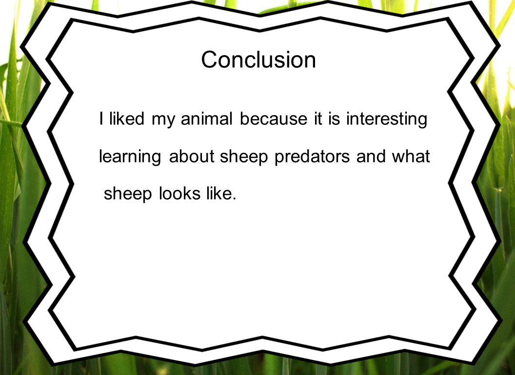 Conclusion I liked my animal because it is interesting