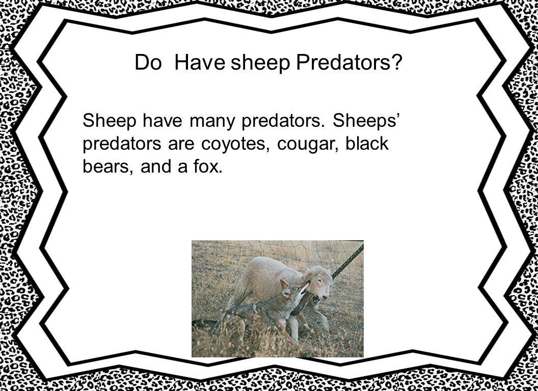 Do Have sheep Predators