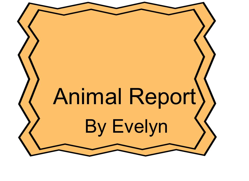 Animal Report Cover Page Title of the report Author Picture of animal