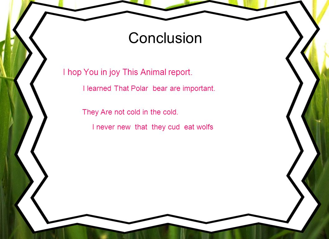 Conclusion I hop You in joy This Animal report.