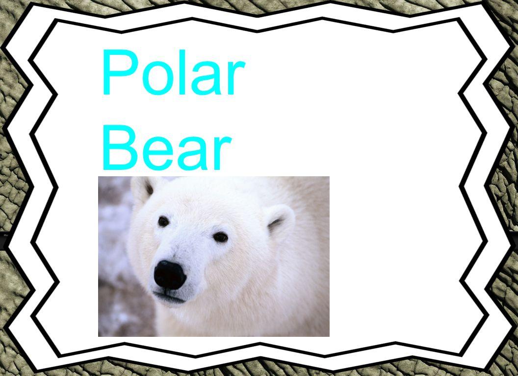 Polar Bear Animal Reports