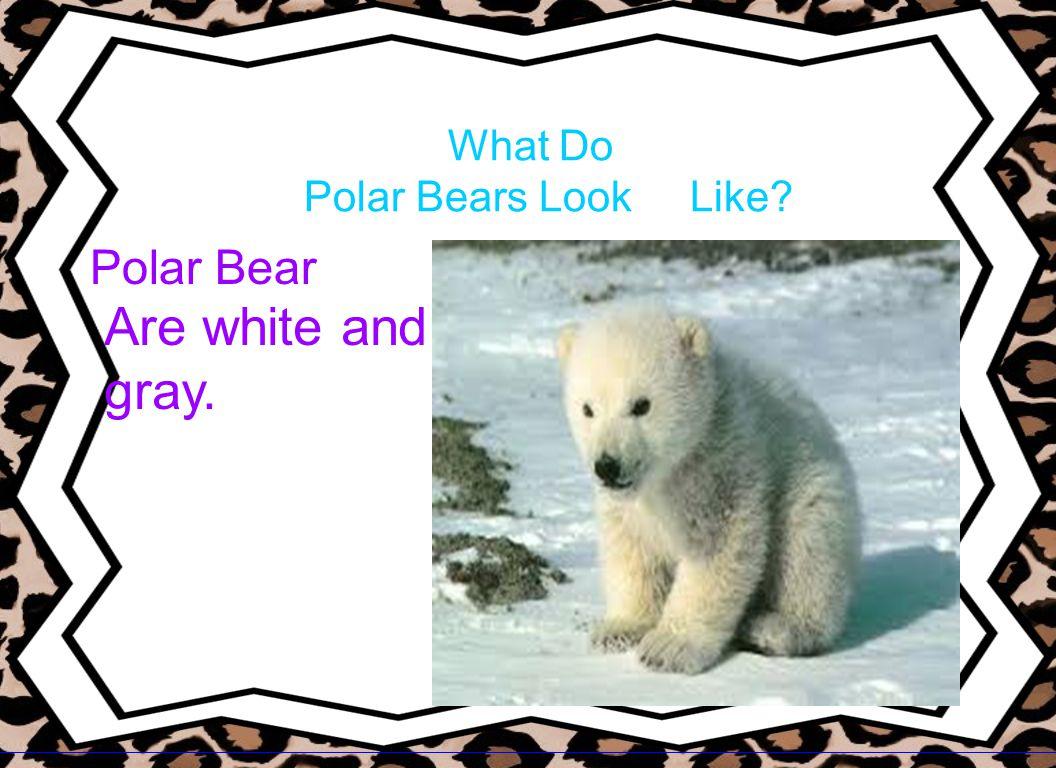 What Do Polar Bears Look Like