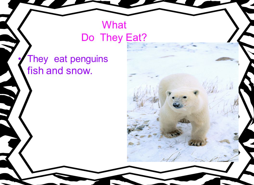 What Do They Eat They eat penguins fish and snow.