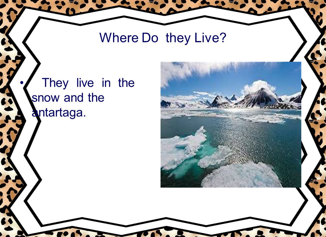 Where Do they Live They live in the snow and the antartaga.