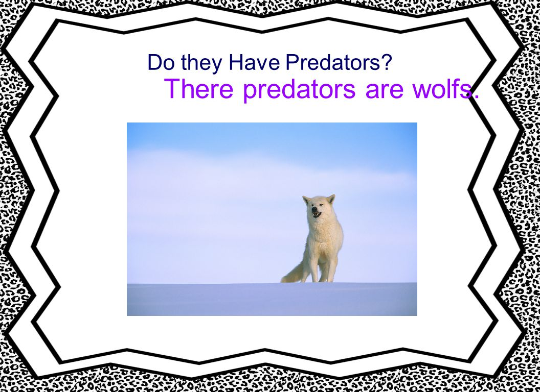 There predators are wolfs.