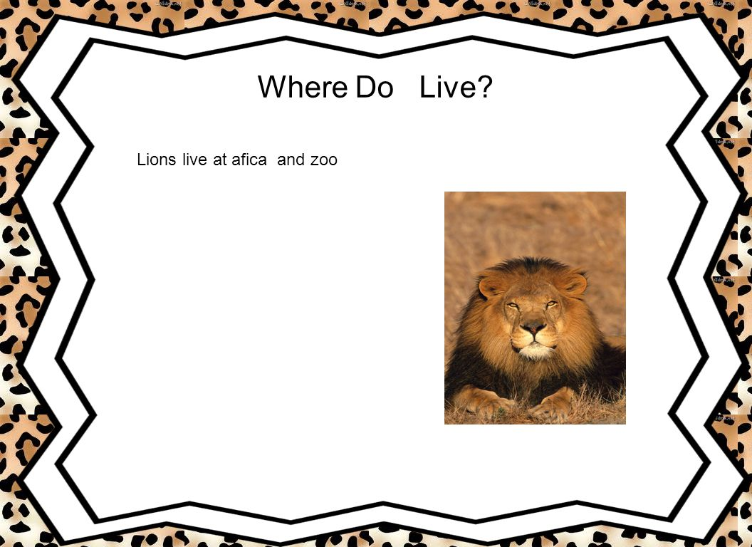 Where Do Live Lions live at afica and zoo