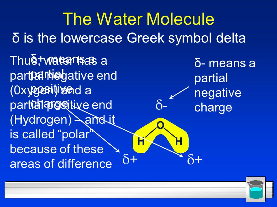 The Water Molecule δ is the lowercase Greek symbol delta δ- δ+ δ+