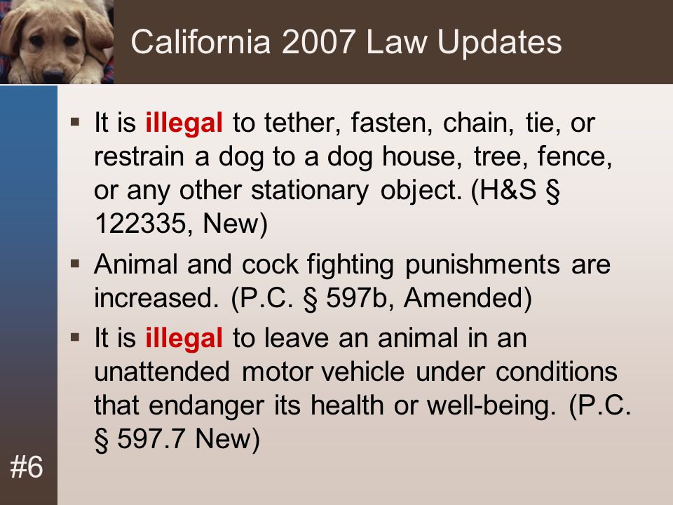 California 2007 Law Updates