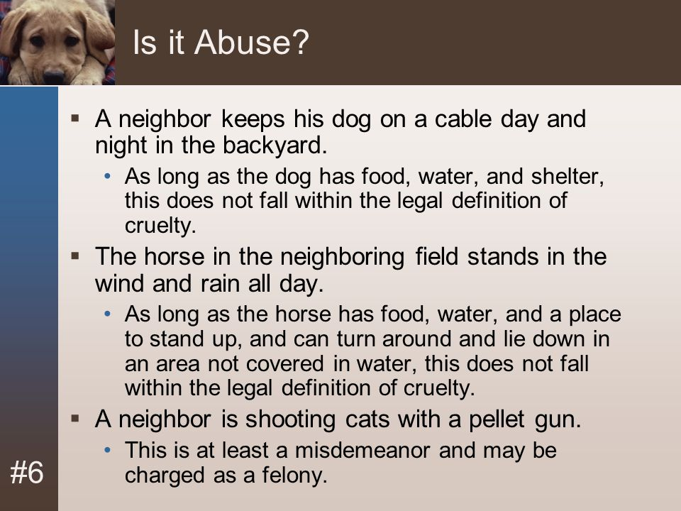 Module 6. Animal Abuse January 2008. Is it Abuse A neighbor keeps his dog on a cable day and night in the backyard.
