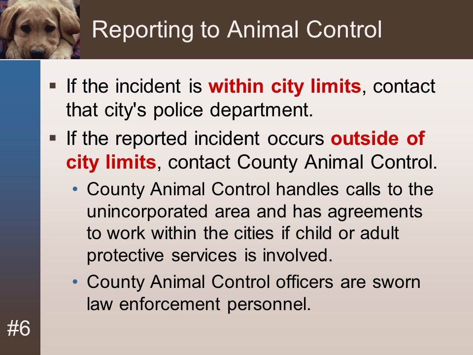 Reporting to Animal Control