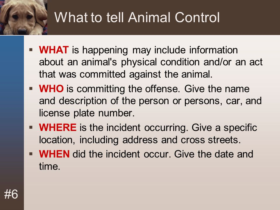 What to tell Animal Control