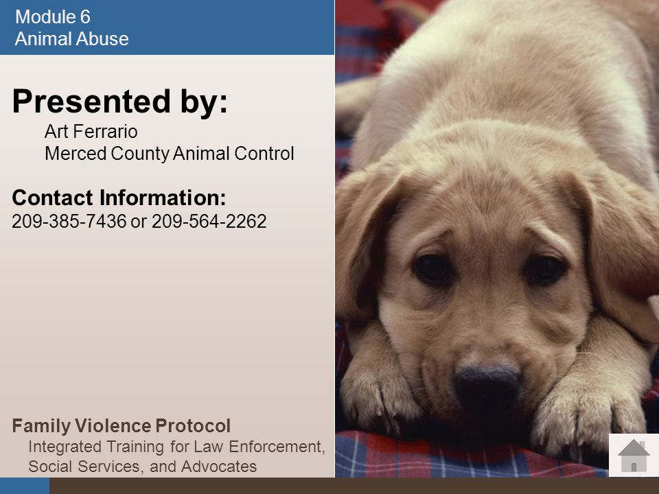 Module 6 Animal Abuse Module 6. Animal Abuse. January 2008. Presented by: Art Ferrario. Merced County Animal Control.