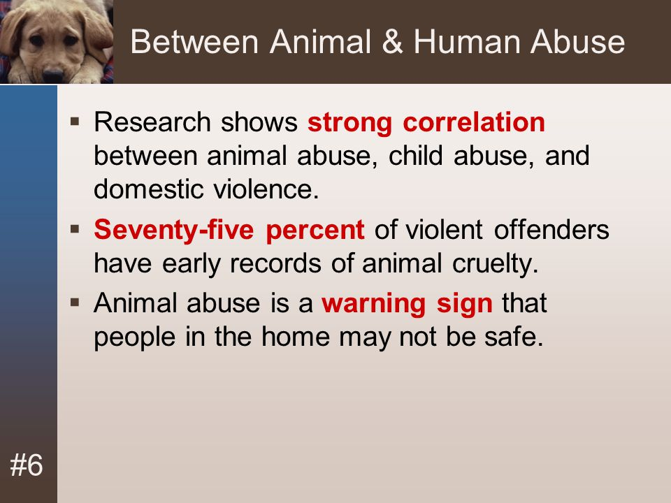 Between Animal & Human Abuse