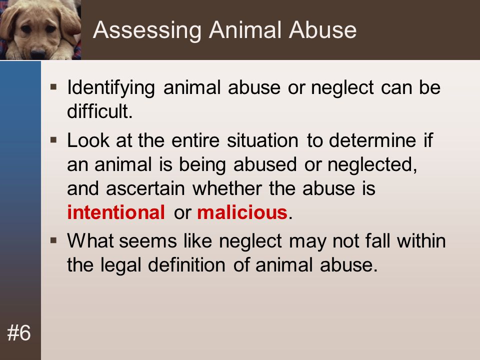 Assessing Animal Abuse