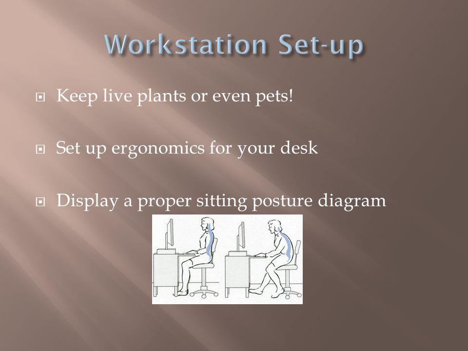 Workstation Set-up Keep live plants or even pets!