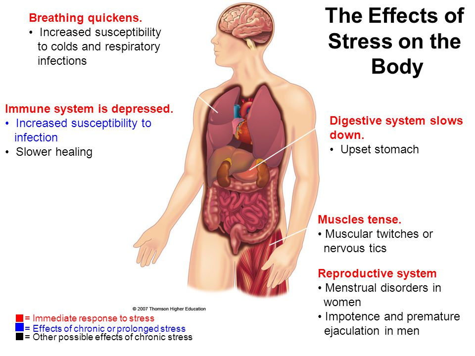 a report on stress and its effects on the body Geopathic stress (gs) is one factor that can contribute to ill health it has the ability to disrupt our body's natural rhythms and functions, and to produce emotional and psychological responses.