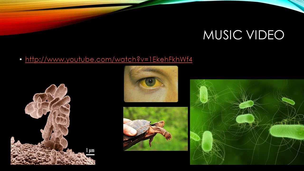 Music Video http://www.youtube.com/watch v=1EkehFkhWf4