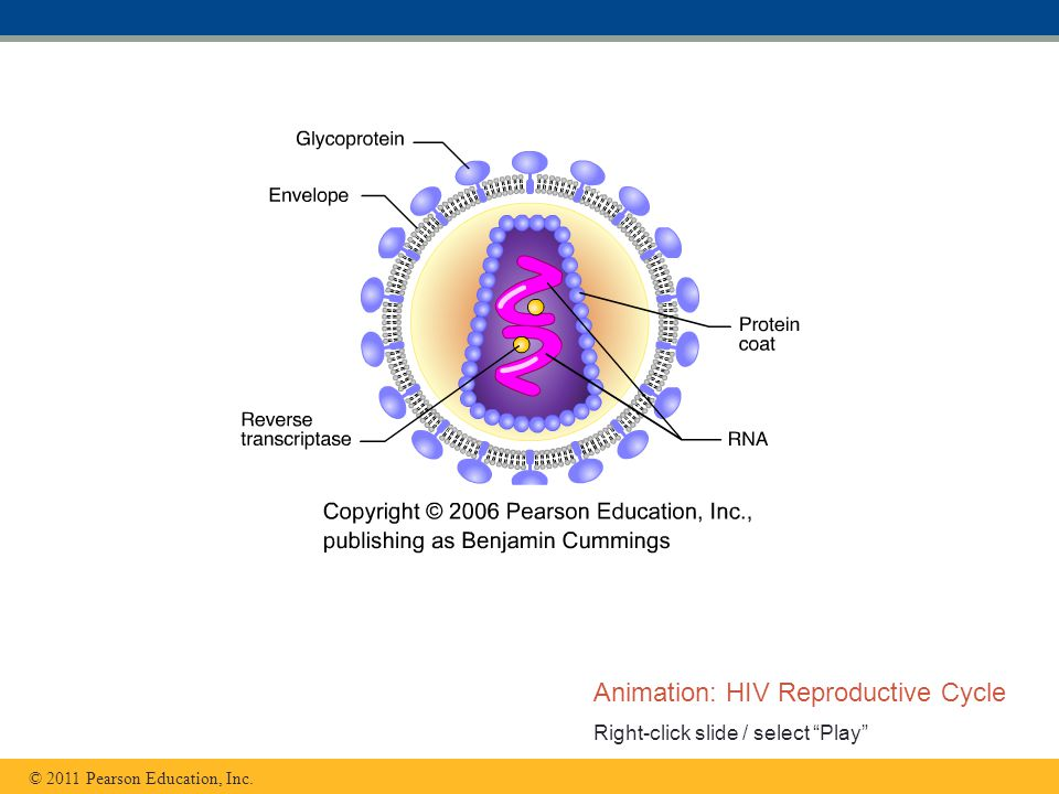 Animation: HIV Reproductive Cycle