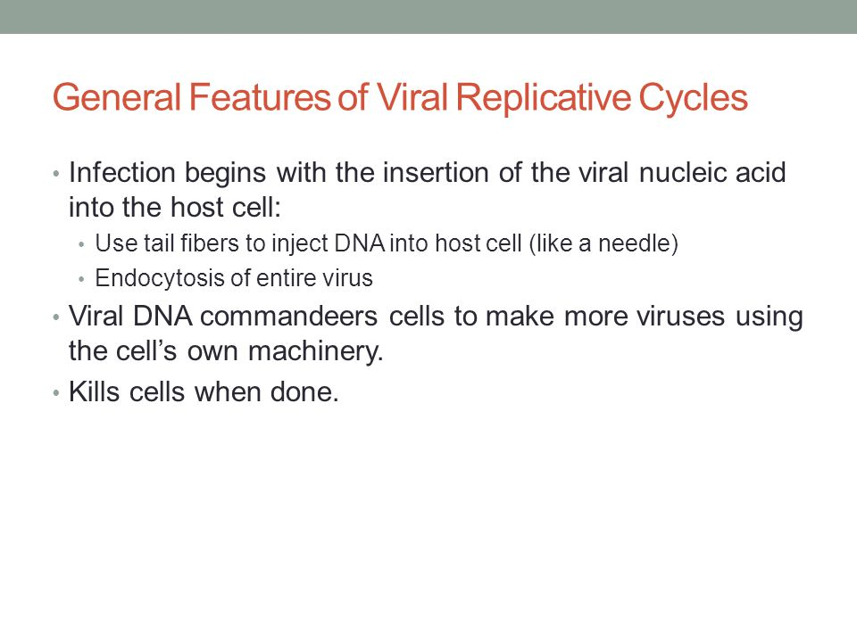 General Features of Viral Replicative Cycles