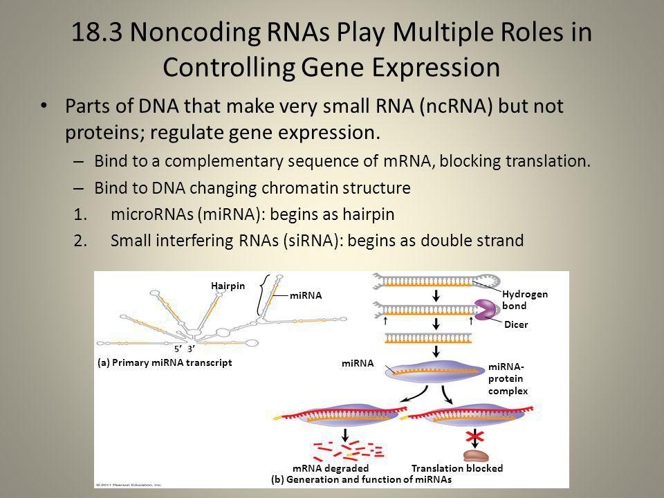 18.3 Noncoding RNAs Play Multiple Roles in Controlling Gene Expression