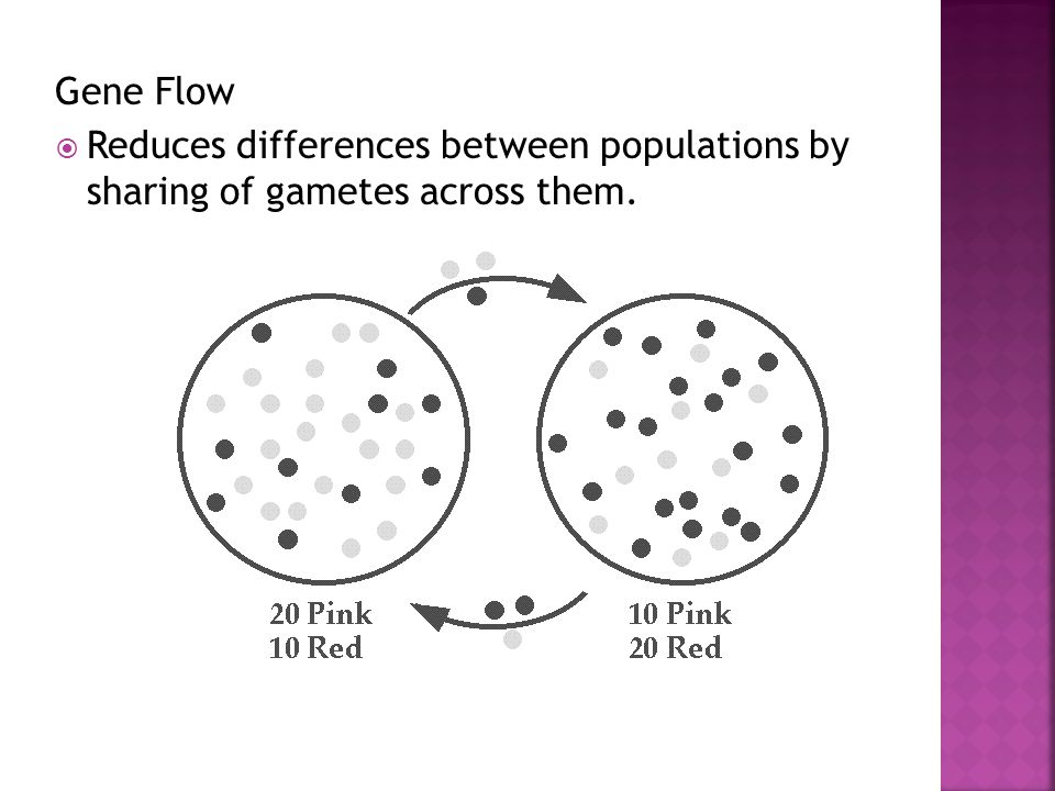 Gene Flow Reduces differences between populations by sharing of gametes across them.