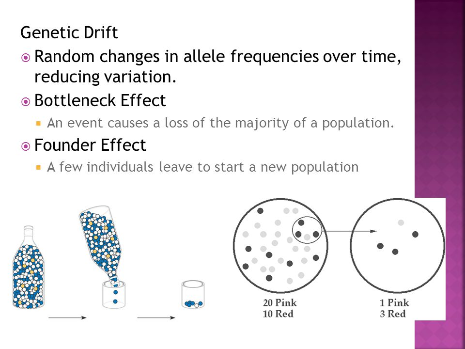 Random changes in allele frequencies over time, reducing variation.