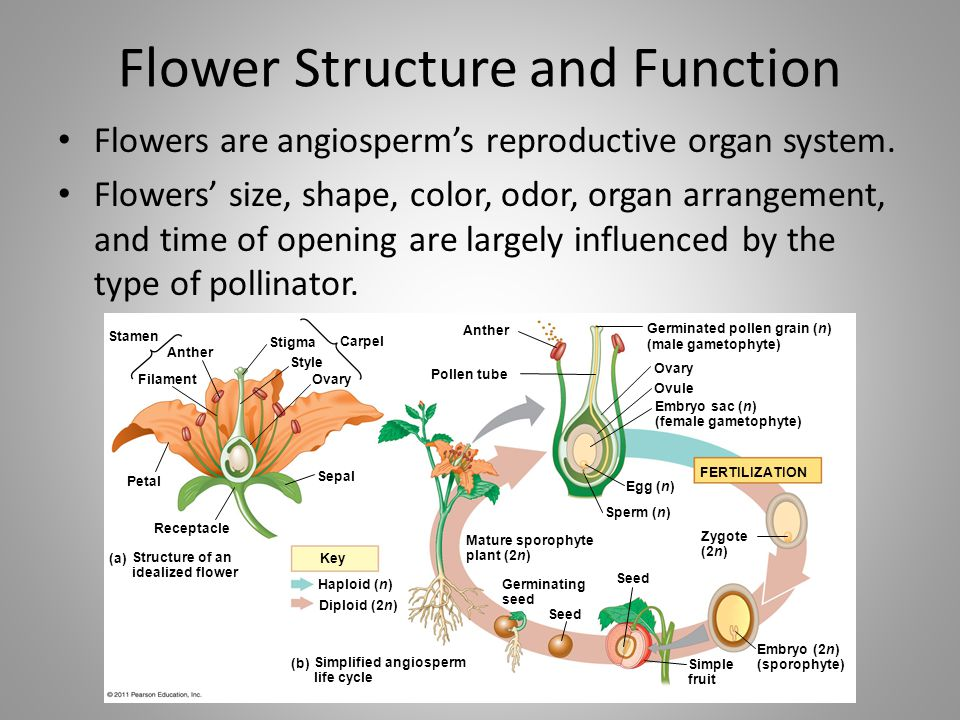 Flower Structure and Function