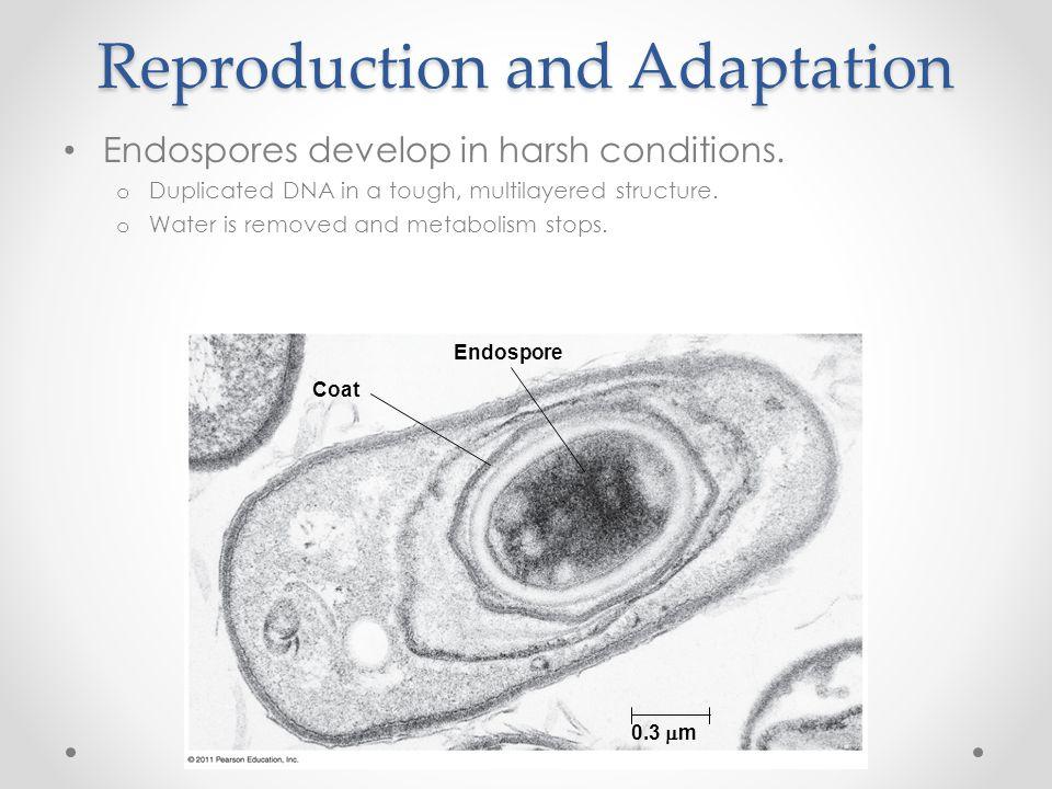 Reproduction and Adaptation