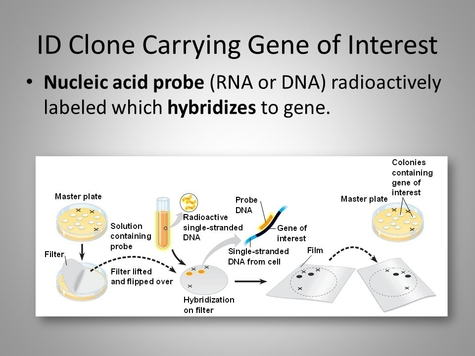 ID Clone Carrying Gene of Interest