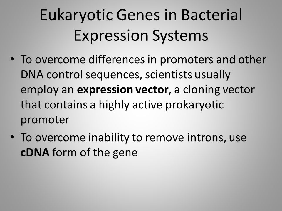 Eukaryotic Genes in Bacterial Expression Systems