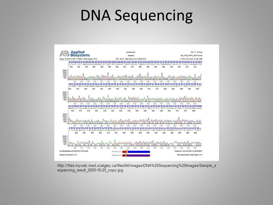 DNA Sequencing http://files.myweb.med.ucalgary.ca/files/64/images/DNA%20Sequencing%20Images/Sample_sequencing_result_2005-10-25_copy.jpg.