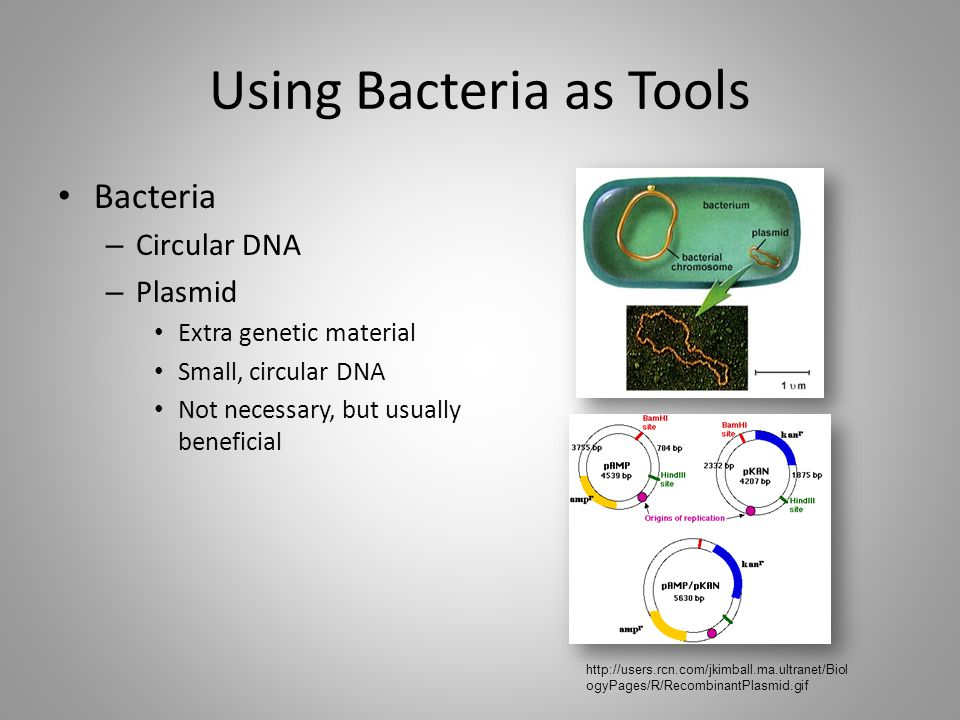 Using Bacteria as Tools