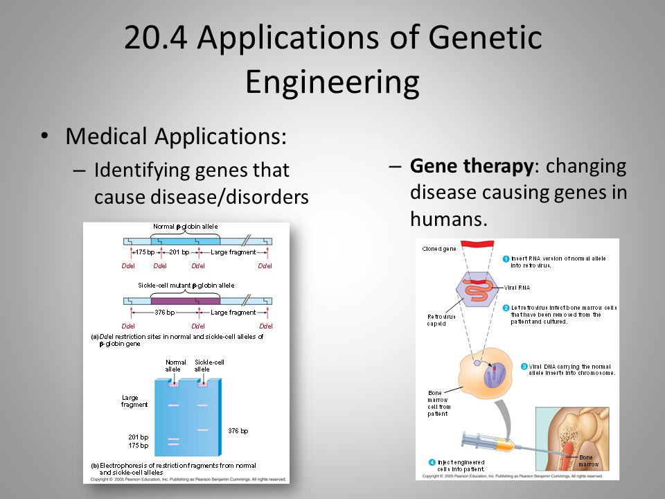 20.4 Applications of Genetic Engineering