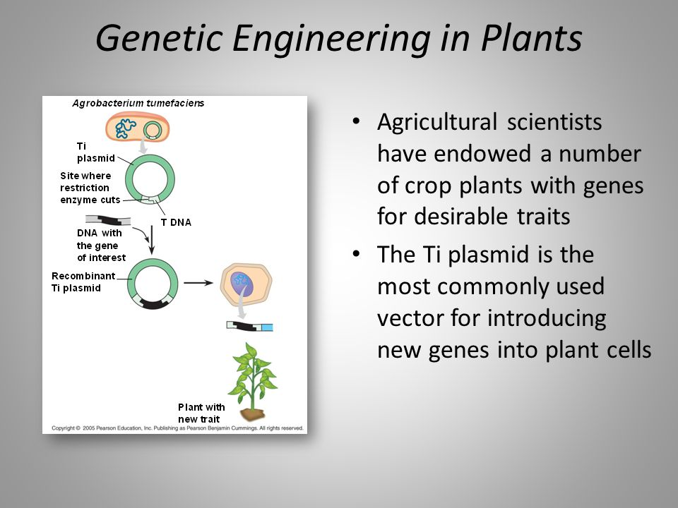 Genetic Engineering in Plants