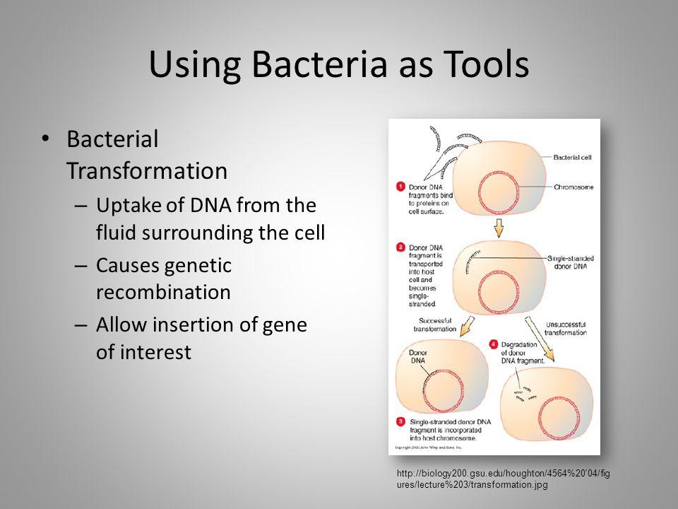 Using Bacteria as Tools