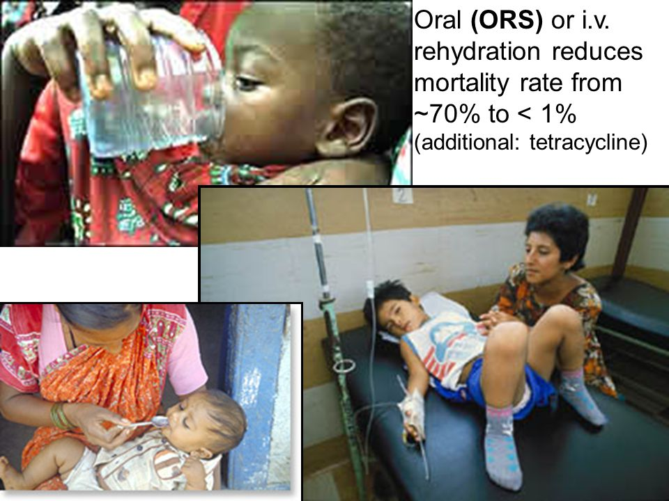 Oral (ORS) or i.v. rehydration reduces mortality rate from ~70% to < 1%
