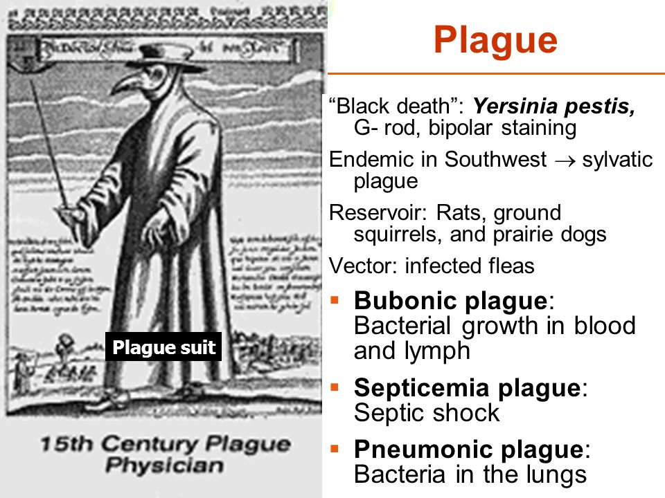 Plague Bubonic plague: Bacterial growth in blood and lymph