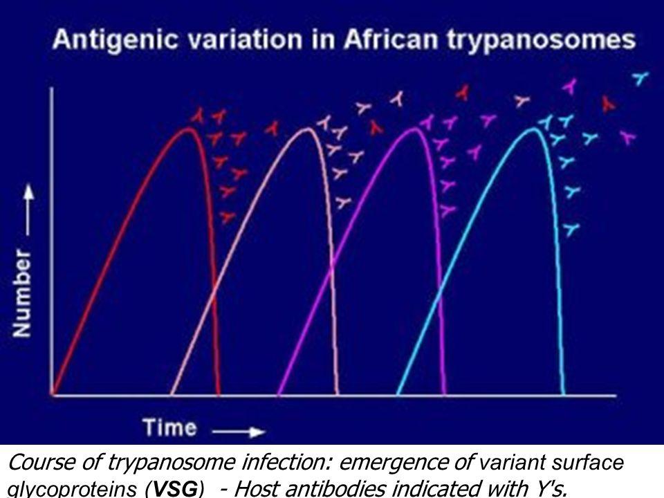 Antigenic variation