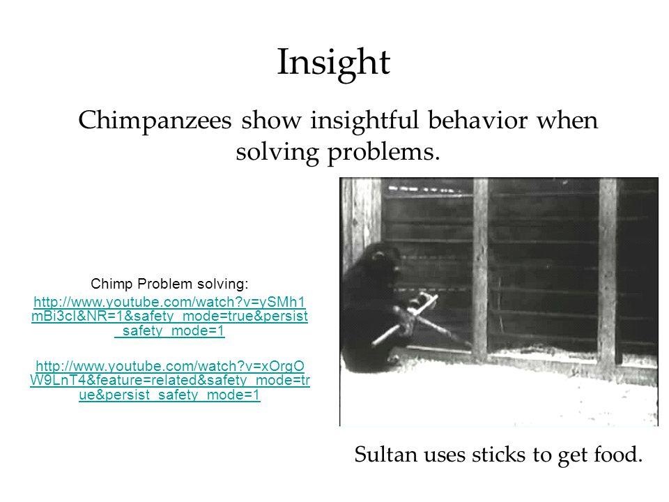 Insight Chimpanzees show insightful behavior when solving problems.