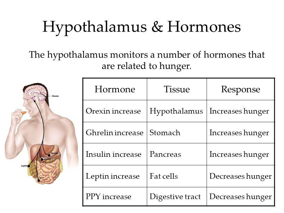 Hypothalamus & Hormones