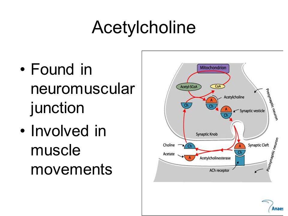 Acetylcholine Found in neuromuscular junction