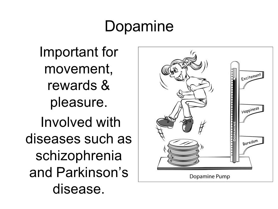 Dopamine Important for movement, rewards & pleasure.