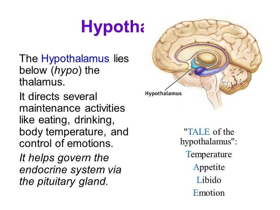 TALE of the hypothalamus :