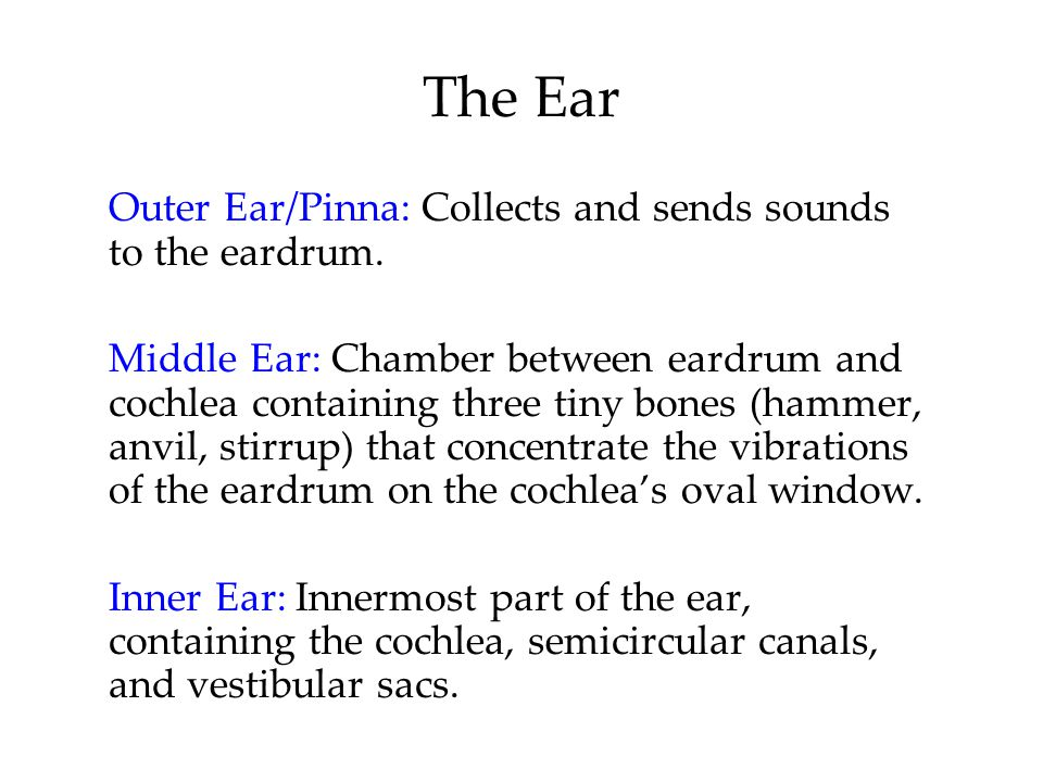 The Ear Outer Ear/Pinna: Collects and sends sounds to the eardrum.