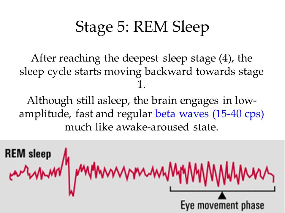 Stage 5: REM Sleep After reaching the deepest sleep stage (4), the sleep cycle starts moving backward towards stage 1.