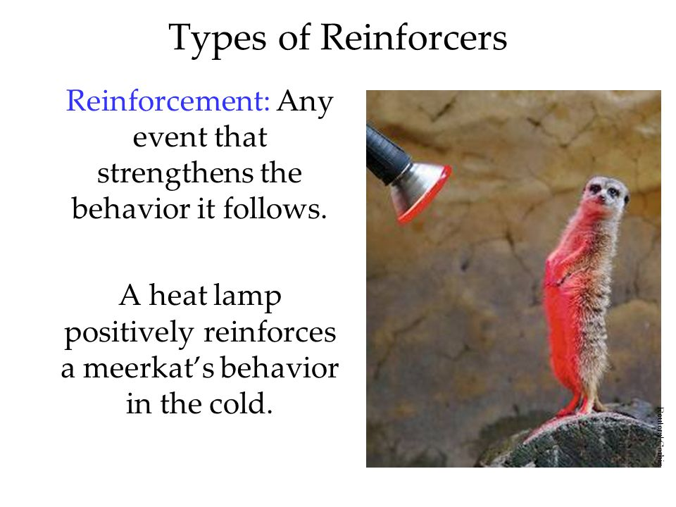 Types of Reinforcers Reinforcement: Any event that strengthens the behavior it follows.