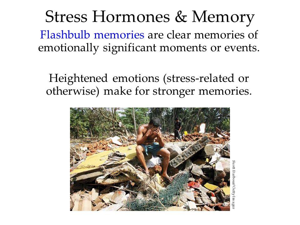 Stress Hormones & Memory