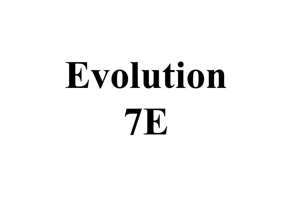 Evolution 7E