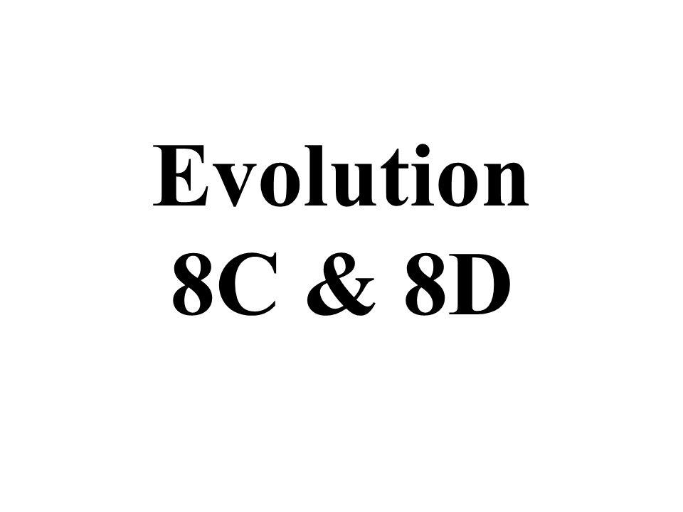 Evolution 8C & 8D