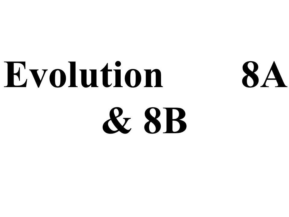 Evolution 8A & 8B